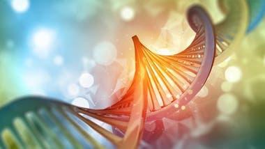 Con los años, el deterioro se acumula en el ADN.