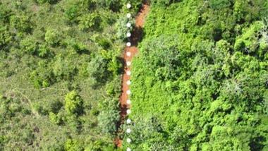 Esta imagen aérea muestra las diferencias entre la tierra revivida por el experimento de las naranjas (derecha) y la tierra que no ha sido tratada (izquierda).