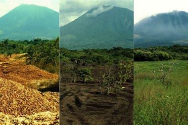 Este collage hecho por Janzen y Hallwachs muestra el rejuvenecimiento del área gracias a los desperdicios de naranjas