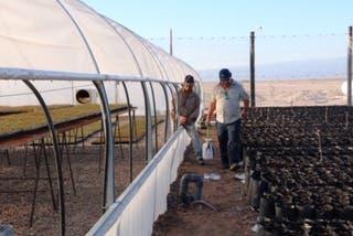 Balboni trabaja en su vivero mientras espera que sus plantas de pistachos empiecen a dar sus frutos