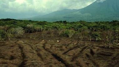Seis meses después de ser arrojados, los desechos ya se habían descompuesto y habían fertilizado el suelo previamente árido.