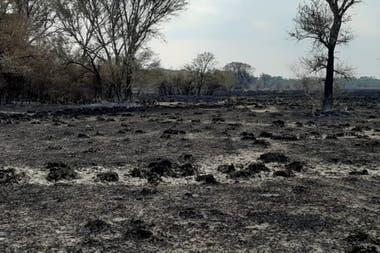 Una imagen desoladora después del paso del fuego