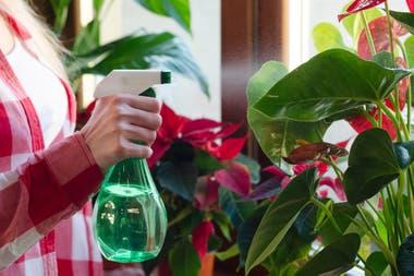 Resultado de imagen de pulverizar las plantas