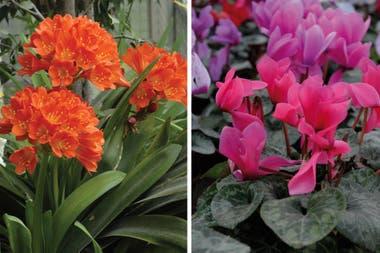 9 Plantas Con Flores Que Crecen A La Sombra La Nacion - Flores-de-sombra