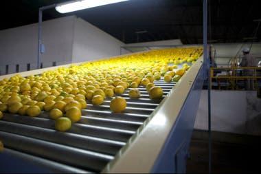 Los limones y naranjas argentinos de esta temporada no podrán ingresar a Europa