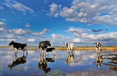 Con fenómenos cada vez más extremos, los efectos del cambio climático en la Argentina ya impactan directamente en la economía y la política: este año, la sequía dejará US$6000 millones en pérdidas y el campo se prepara para lidiar con una nueva realidad