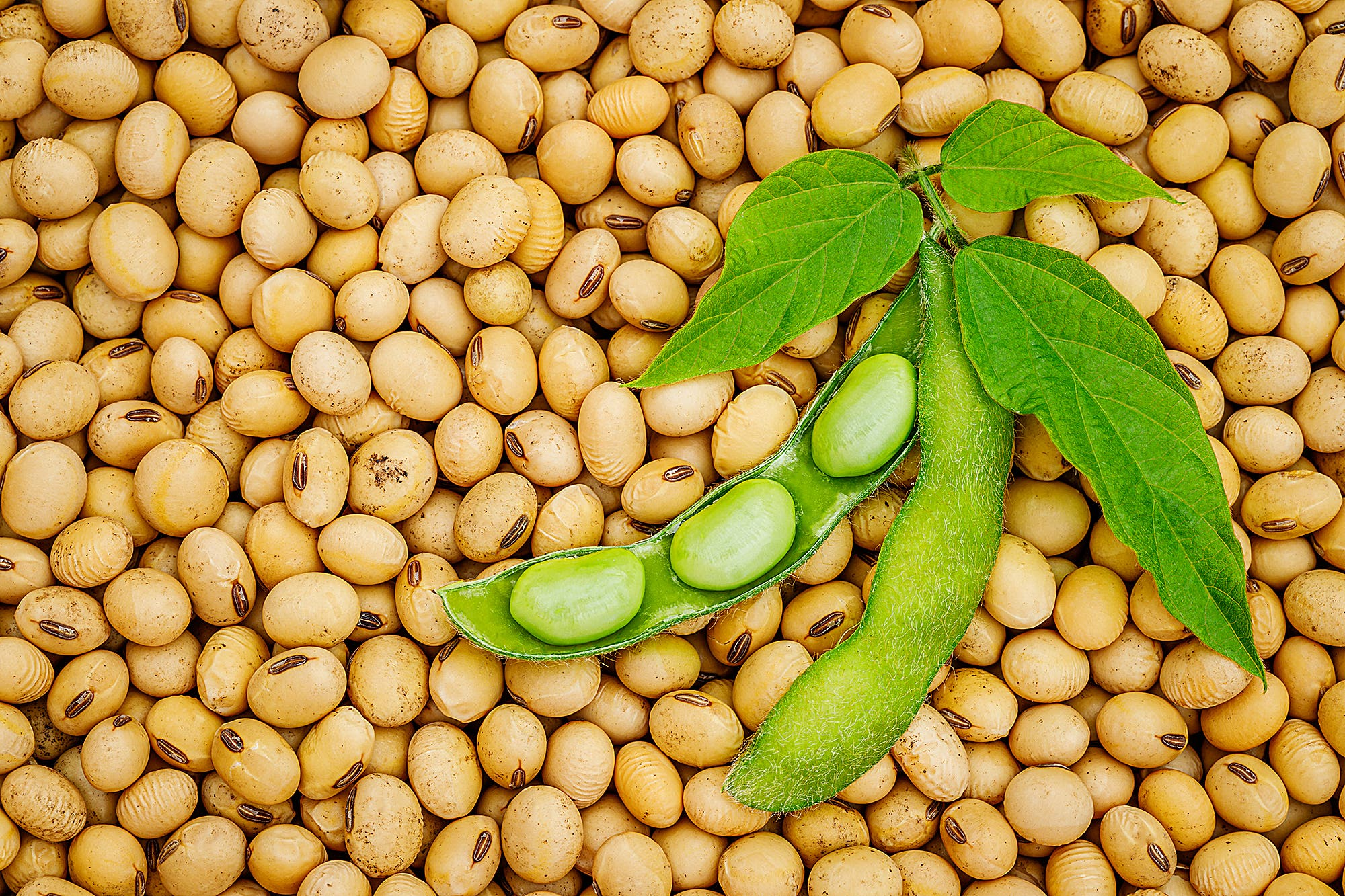 El precio de la soja volvió a subir en la Bolsa de Chicago y alcanzó el nivel más alto desde junio de 2018