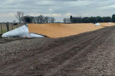"""""""Esto es para volver a sembrar, para las semillas, los trabajos"""", dijo el productor"""