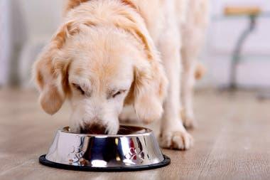 Advierten por la mala alimentación de las mascotas durante la cuarentena