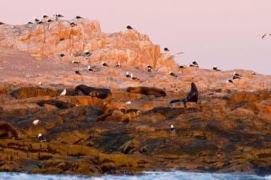 Islote Lobos está cerca de Playas Doradas y a 50 kilómetros de San Antonio Oeste, en el litoral de Río Negro