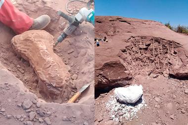 Dos de las fotos provistas por Pampa Energía sobre el descubrimiento de los fósiles
