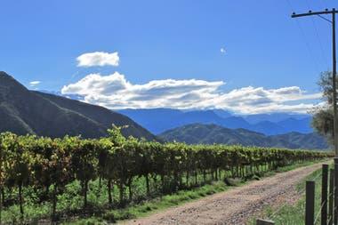 Las condiciones climáticas, que afectaron a las economías regionales, no jugaron en esta temporada en contra del vino