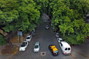 El túnel de árboles en la avenida Melián, en Belgrano