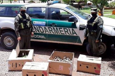 Los 216 loros fueron entregados por Gendarmería a la Dirección de Bosques y Fauna de Santiago del Estero