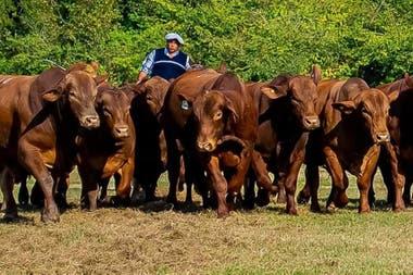 En 2007 inauguraron su centro de embriones y para multiplicar su genética realizaron convenios con otros productores ganaderos, donde ellos ponían los embriones y sus socios las vacas receptoras