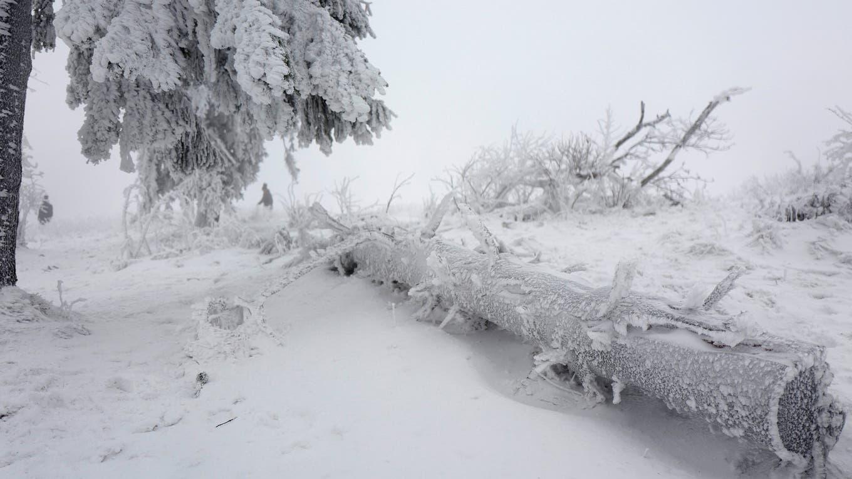 Árboles cubiertos de nieve en Feldberg, en Alemania. Foto: Reuters / Kai Pfaffenbach