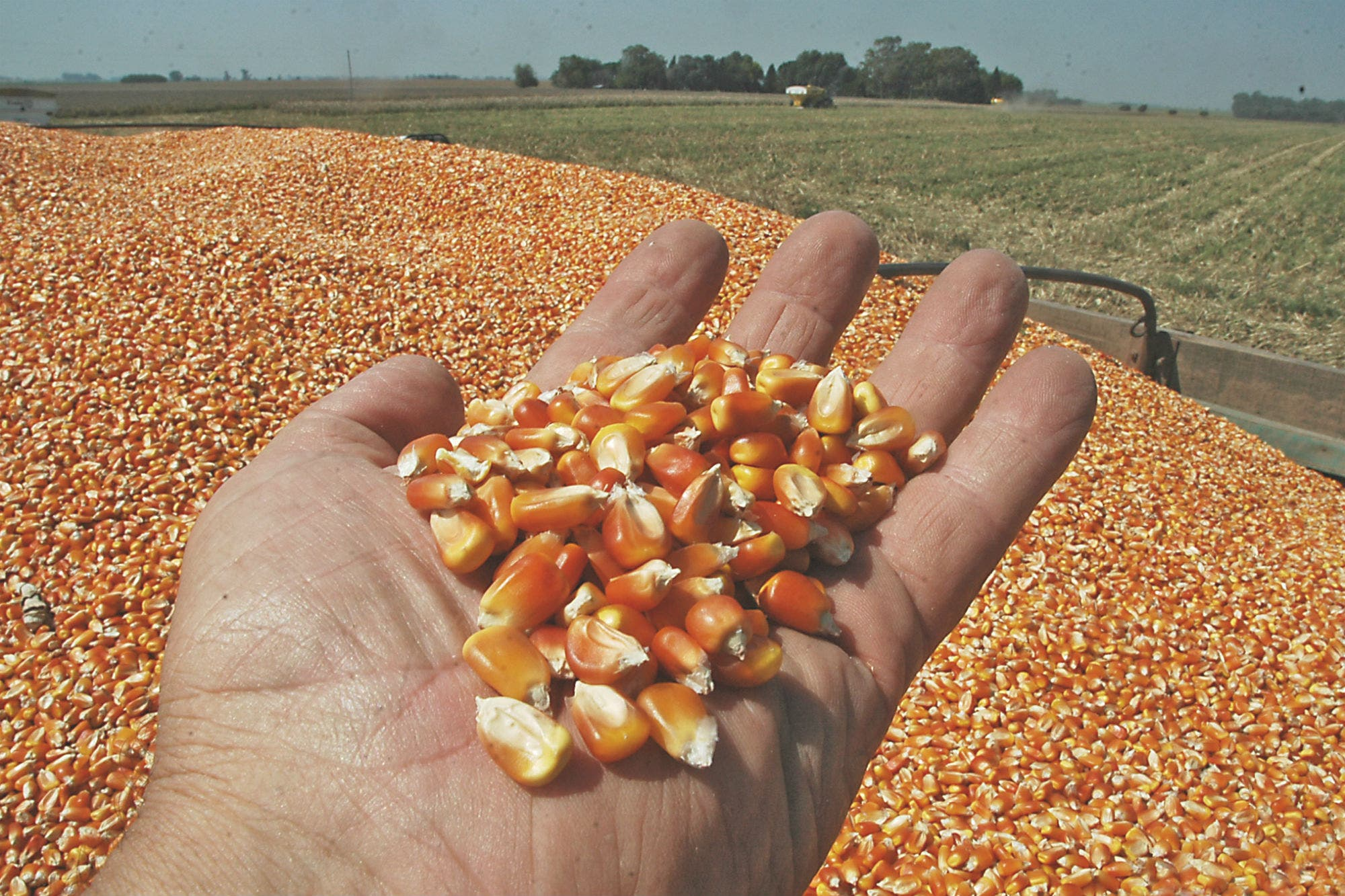 La previsión de una cosecha récord de maíz en Estados Unidos les suma presión bajista a los precios