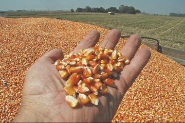 El maíz vería comprometida su producción en zonas alejadas de los puertos