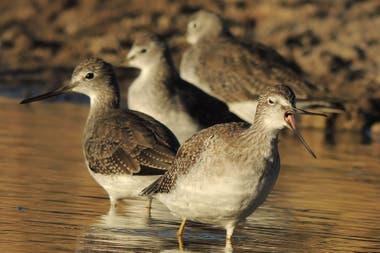 La biodiversidad es abundante: se pueden ver gaviotas, gaviotines, playeros, chorlitos, ostreros, garzas gavilanes, halcones, torcazas, lechuzas y bandurritas, entre muchas otras aves