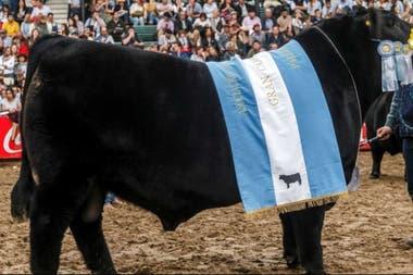 El año pasado, Don Emilio, de la cabaña Tres Marías, obtuvo el premio de Gran Campeón Macho