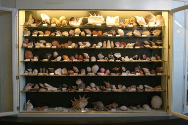 Hoy, las más de 30 mil piezas que forman la colección esperan volver a ser expuestas