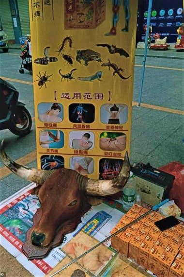 Escorpios y murciélagos se ofrecen como productos medicinales en los mercados chinos