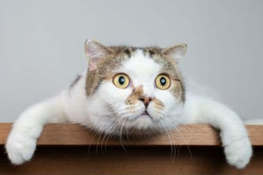 Los gatos son muy territoriales, y la cuarentena les podría estar jugando una mala pasada