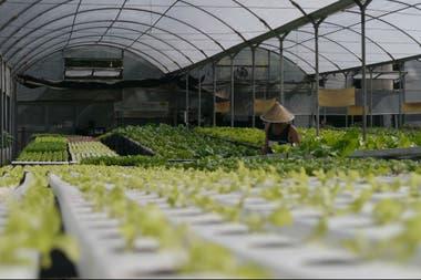 En Pablo Nogués, en 1000 metros cuadrados los Lisanti tienen 18.000 plantas