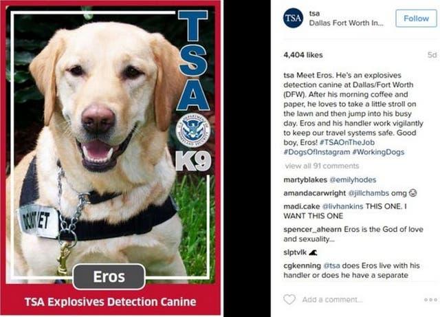 Eros es uno de los perros detectores de explosivos de la TSA que fascinan a sus seguidores de Instagram