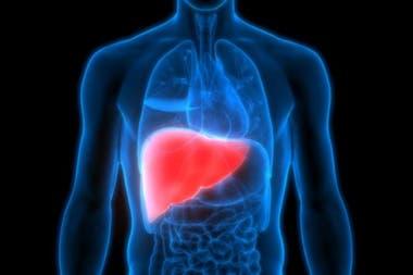 Hay varios virus que afectan nuestro hígado, algunos de forma leve y otros de forma severa