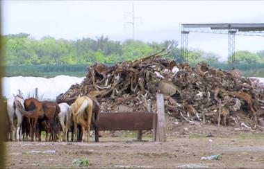 Imagen del documental 5 Corazones