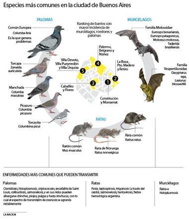 que enfermedad puede transmitir las palomas