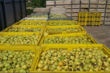 Las peras, afectadas en las exportaciones en los últimos años