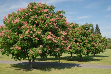 Gu a b sica para elegir qu rbol plantar dependiendo de for Arboles de hoja perenne para jardin