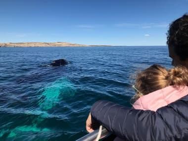 Los avistajes de ballenas se realizan en esta época desde diferentes embarcaciones que salen desde Puerto Pirámides