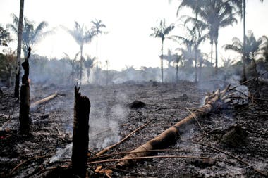 Los incendios intencionales se provocan para quemar tierras que luego se utilizan para cultivar
