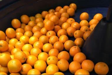 Productores buscan nuevos destinos para la naranja nacional