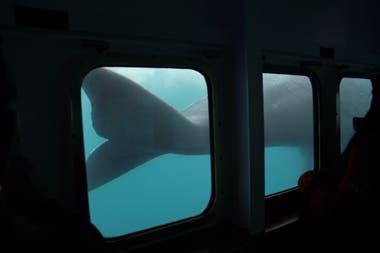 Los turistas disfrutan del avistaje submarino de ballenas en Puerto Pirámides, a bordo de la embarcación Yellow Submarine