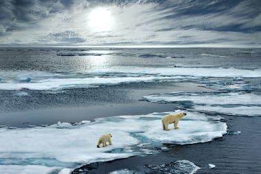 El calentamiento provocará la reducción drástica del hielo de los casquetes polares (principalmente el Artico) y los hielos continentales.