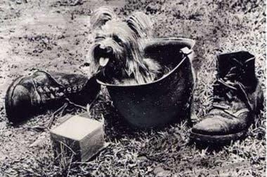 La estampa de Smoky en posición de descanso dentro del casco de su dueño fue reproducida en diversas estatuas en diferentes lugares de los Estados Unidos y Australia
