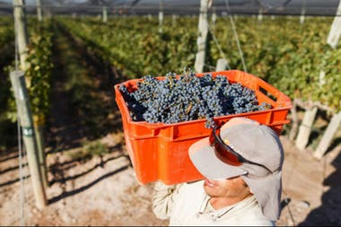 La cadena vitivinícola equivale al 0,4% del PBI