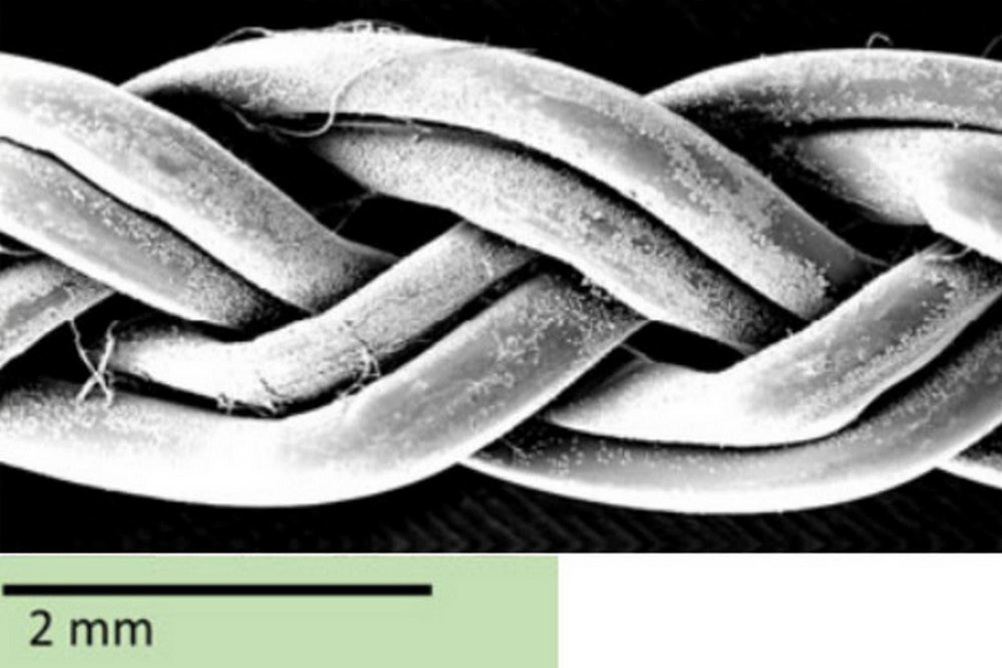 Con fibras de gusano: así se busca reparar tendones y ligamentos dañados