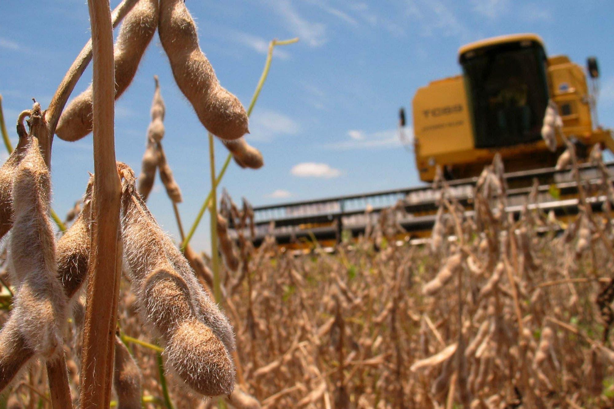 Alivio: tras las lluvias, prevén mayores cosechas de soja y de maíz