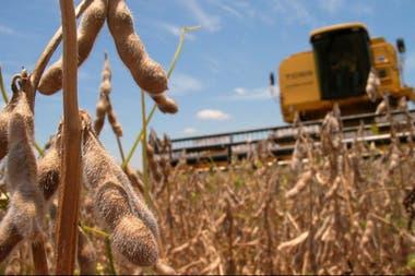 El avance de la cosecha limita la posibilidad de subas en los precios de la soja argentina