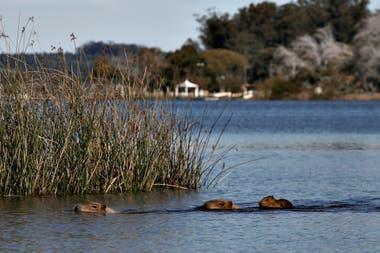 Al fondo se observa la zona turística de la laguna, sin presencia de personas