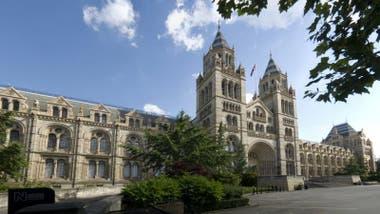 El Museo de Historia Natural, en Londres, conserva una de las únicas dos muestras de kernowita en el mundo.