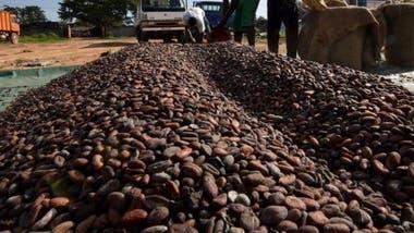 Según el Banco Mundial, el cacao representa el 15% del Producto Bruto Interno de Costa de Marfil