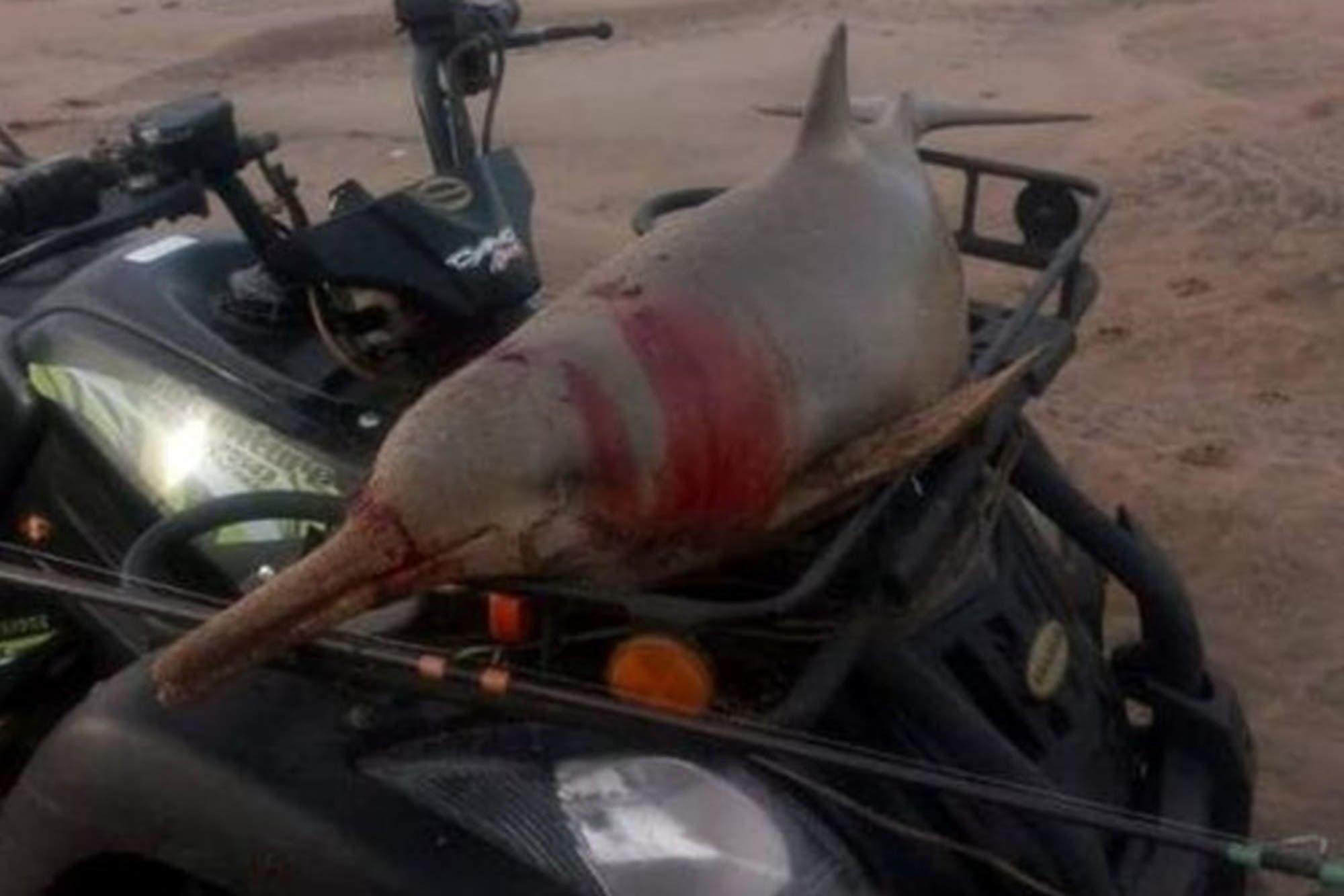 Quién es el hombre que mató a un delfín y se lo comió