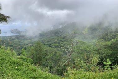 Una de las grandes estructuras fue hallada debajo de las Islas Marquesas, en la Polinesia Francesa, en el Océano Pacífico