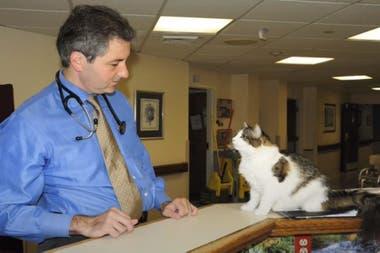 El gato Oscar es famoso en el mundo: en la imagen lo acompaña David Dosa, el médico que escribió un libro inspirado en él